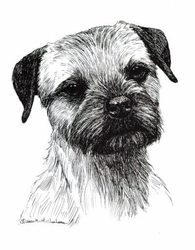 """Border Terrier """"Head Study"""" Limited Edition Print"""
