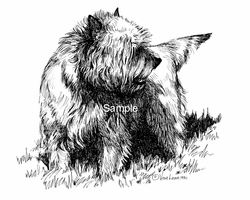"Cairn Terrier ""Looking Back"""