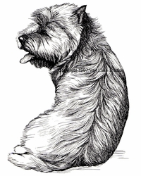 "Cairn Terrier ""Sitting Pretty"""