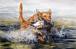Chesapeake Bay Retriever With Duck