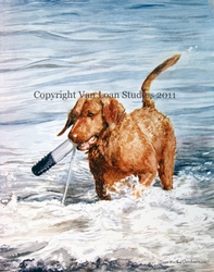 Chesapeake Bay Retriever - With Her Bumper