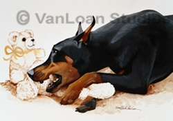 "Doberman Pinscher ""Teddy Bear Troubles"""