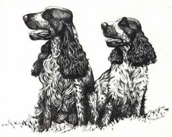 "English Cocker Spaniel ""Two Roan"""