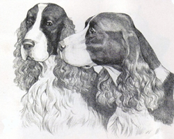 "English Springer Spaniel ""Head Studies"""