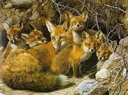 Carl Brenders - Full House Fox Family