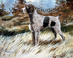 """German Wirehaired Pointer """"In the Field"""""""
