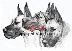 "Great Dane ""Fawns and Brindle"" (Original Drawing)"