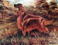 "Irish Setter ""Autumn Afternoon"" Limited Edition Print"