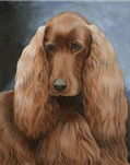 "Irish Setter ""Head Study"""