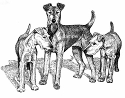"Irish Terrier ""Mom and Pups"""