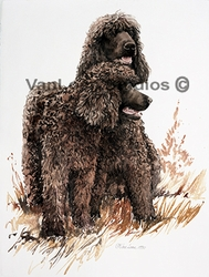 Irish Water Spaniel Collectibles