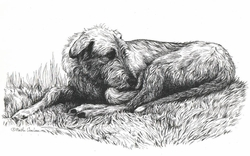 Irish Wolfhound Original Pen and Ink Drawing