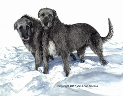 "Irish Wolfhound Print - "" First Snow Of The Year"""