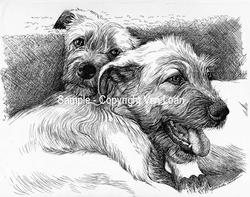 "Irish Wolfhound ""Puppy Pair"""