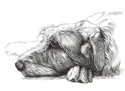 "Irish Wolfhound ""Ready for a Nap"""