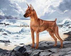 "Miniature Pinscher ""Skippy"""