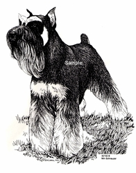 "Miniature Schnauzer ""Standing at Attention"""