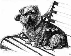 "Norfolk Terrier ""On The Bench"""