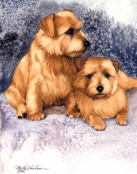 """Norfolk Terrier """"Pair on Blue and Mauve"""""""