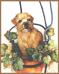 """Norfolk Terrier """"Puppy in a Pot"""" Limited Edition Print"""