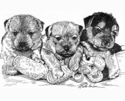 "Norfolk Terrier ""Three Pups"""