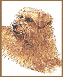 """NorfolkTerrier """"Pretty Girl"""" Limited Edition Print"""