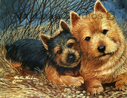 """Norwich Terrier """"Mom and Pup"""""""