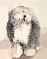 "Old English Sheepdog ""Ready to Work"""
