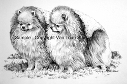 Pomeranian Original Pen and Ink Drawing