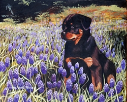 """Rottweiler """"In The Lupins"""""""