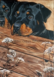 """Rottweiler """"On The Fence"""""""