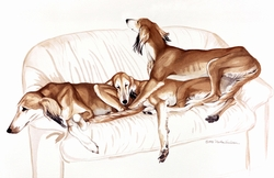 "Saluki ""Salukis On The Couch"""
