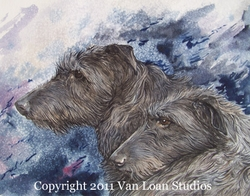 Scottish Deerhound Pair