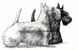 "Scottish Terrier ""Black and White"""