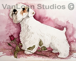"Sealyham Terrier ""The Rose"""