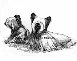 "Skye Terrier ""The Pair"""