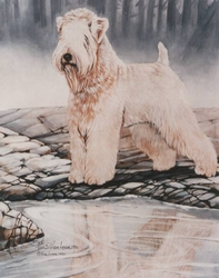 "Soft Coated Wheaten Terrier ""Danny"""