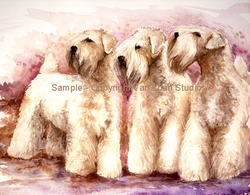"""Soft Coated Wheaten Terrier """"Montgomery Aire"""""""
