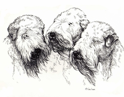 "Soft Coated Wheaten Terrier ""The Trio"""