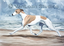 "Whippet ""Beach Runner"""