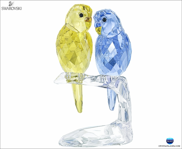(SOLD OUT) Budgies