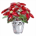 (SOLD OUT) Poinsettia, large