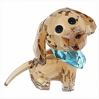 (SOLD OUT) Puppy Milo The Dachshund