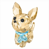 (SOLD OUT) Puppy Oscar The Chihuahua