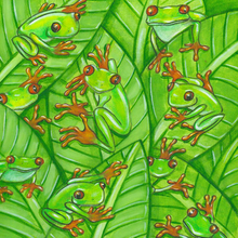 Frogs Everywhere