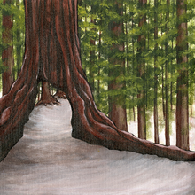 Redwood Tree - Print