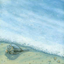 Seashell Surf