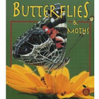 Butterflies and Moths Book