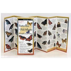 Common Butterflies of the Mid Atlantic Folding Guide