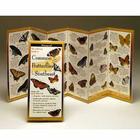 Common Butterflies of the South West Folding Guide
